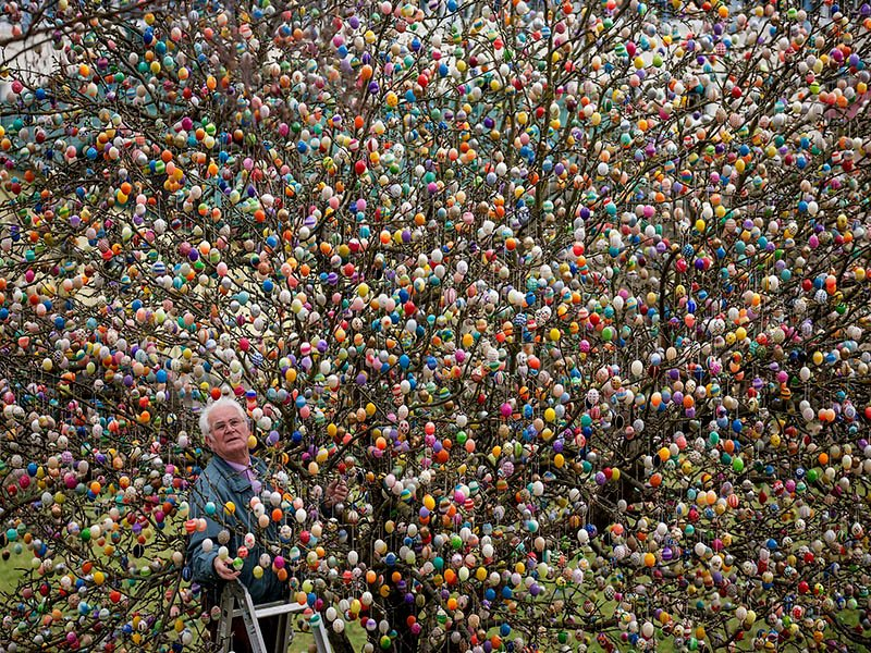 volker-and-easter-egg-tree-IIHIH